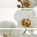 DECOR SET ORQUIDEA / BLANCO BRILLO (3) T08/P Pure CARMEN